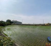 田中央農地