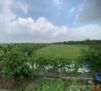 嘉鹿公路農地